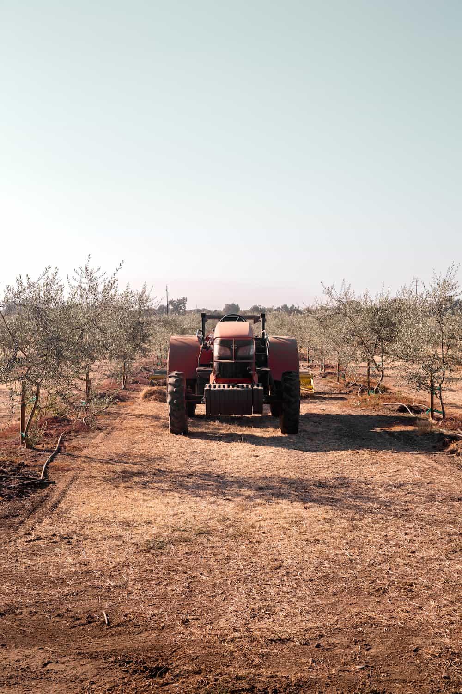 Plum farm California